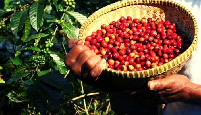 coffee indonesia